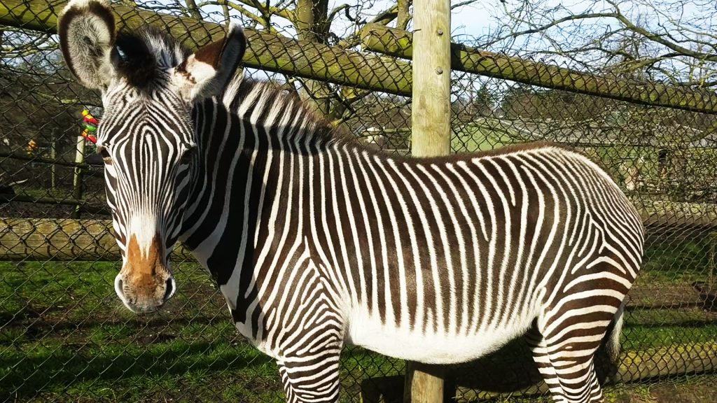 Nice Zebra Safari Park