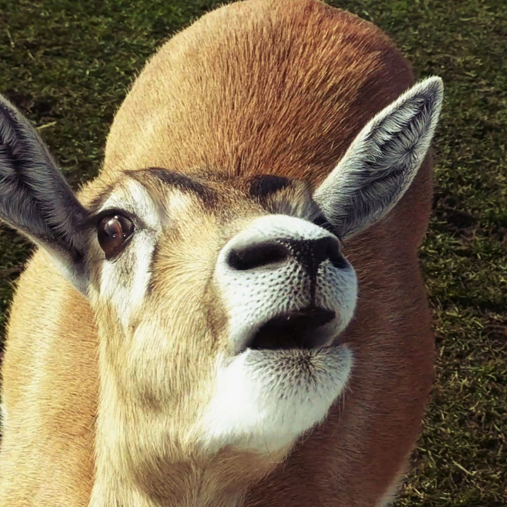 Deer Safari Park