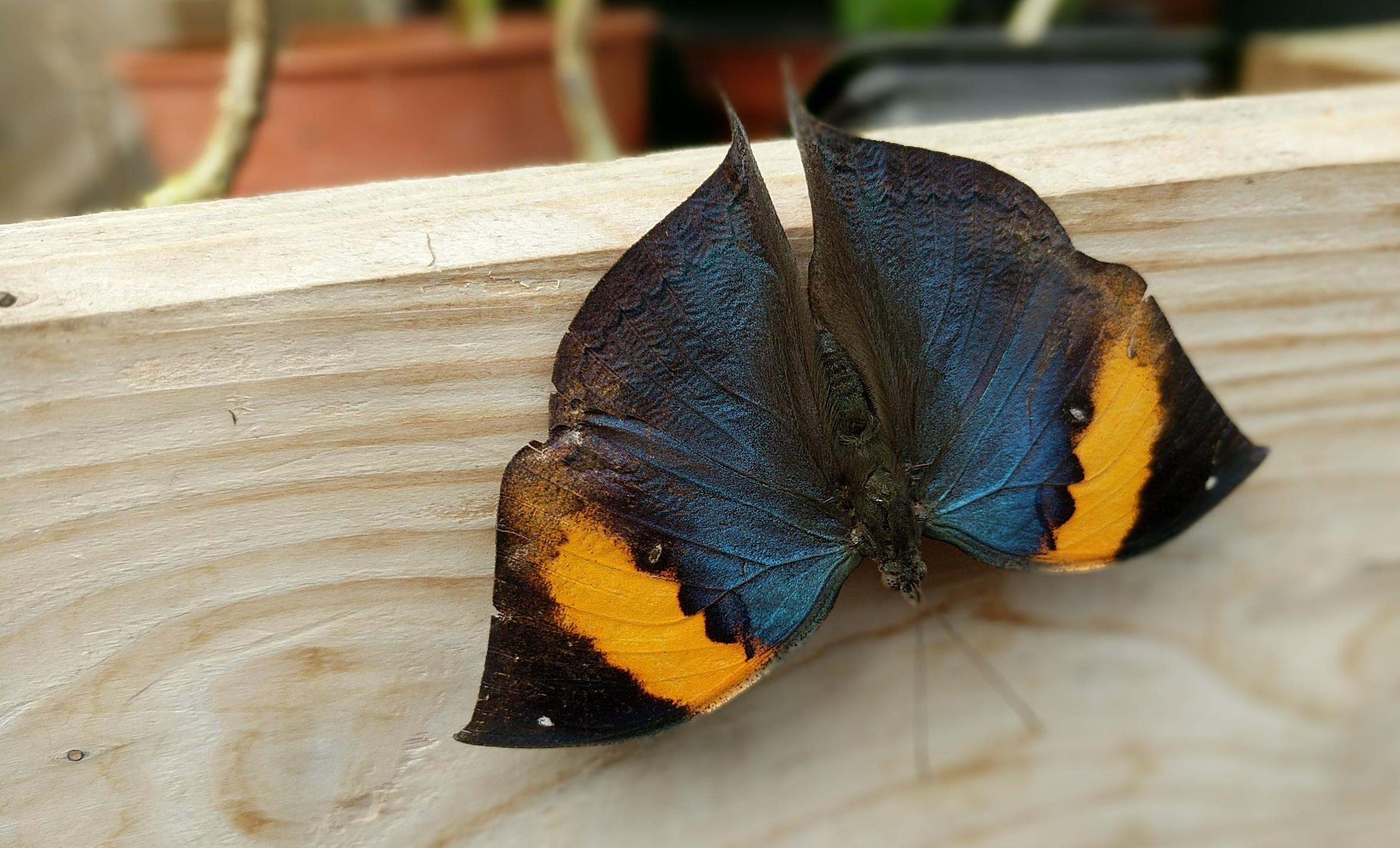 Butterfly Effect Butterfly Farm Stratford