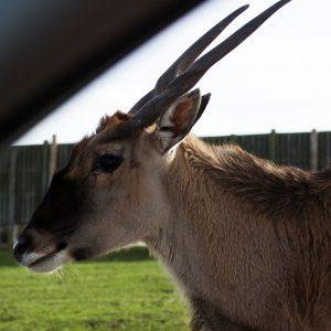 Deer at Safari Park
