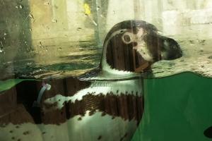 Penguin 1 Safari Park